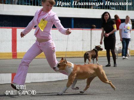 http://www.amulet-diamond.ru/image/girls/italika/italika_11.jpg