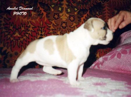 http://www.amulet-diamond.ru/image/puppy/2001_01_16/tsilitsiya.jpg