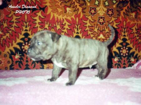 http://www.amulet-diamond.ru/image/puppy/2001_01_16/tsitseron.jpg