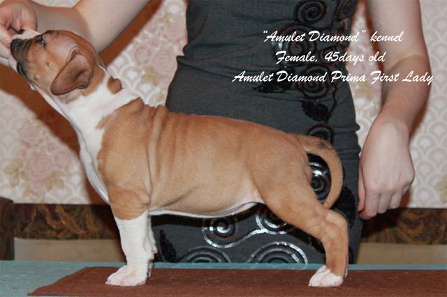 http://www.amulet-diamond.ru/image/puppy/2014_09_04/45d_lialya_01.jpg