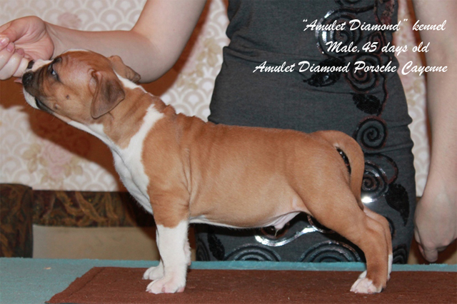 http://www.amulet-diamond.ru/image/puppy/2014_09_04/45d_persik_01.jpg