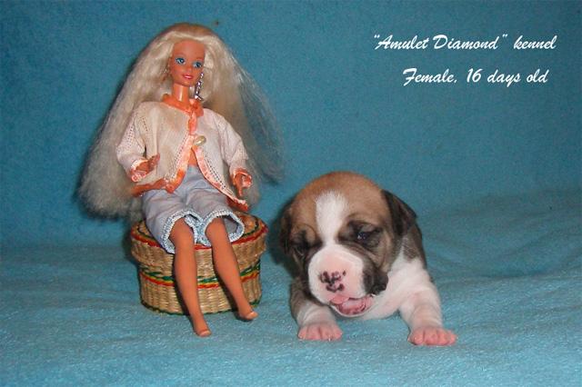 http://www.amulet-diamond.ru/image/puppy/2014_09_04/mila_01.jpg